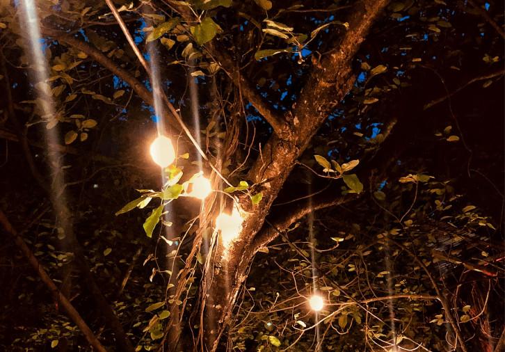 jungle_lights_at_night