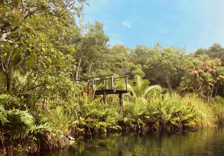 jungle_pond