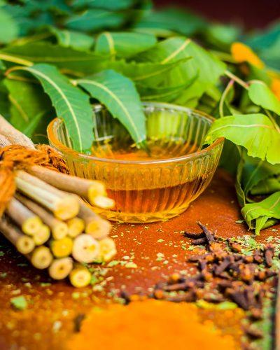 ayurveda_herbs